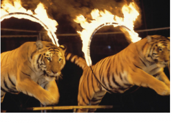 Skills for Trainers Riding the Tail of the Tiger